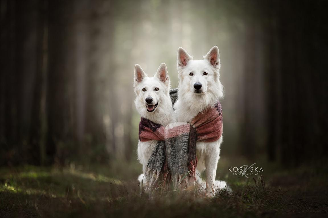 Ookame & Aila
